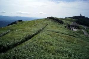 まだ青いススキ草原
