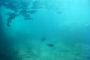 ステラマリスから見える串本の海