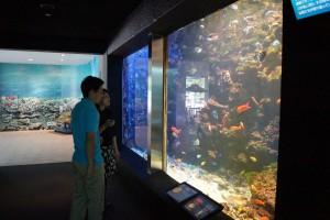 串本の海そのままの水槽