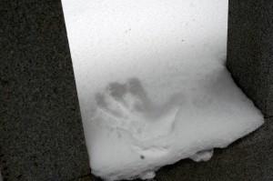 真新しい雪に手形をつけた(中川アナの左手)