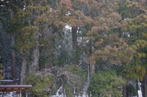 雪が強くなってきた高野山