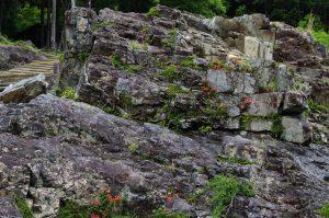岩の間に花が