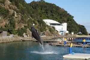 鯨のショー(町立くじらの博物館)
