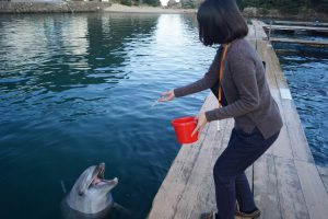 イルカにエサやり体験(町立くじらの博物館)