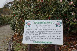 桃源郷運動公園ツバキ園