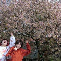 季節外れの桜満開