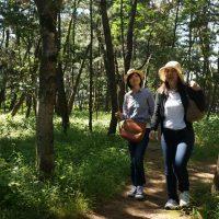 王子ヶ浜の松林
