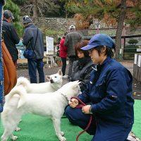 紀州犬とのふれあい