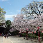 和歌山城の岡口門(重文)と桜