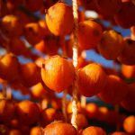 日本一の串柿の里
