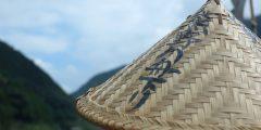 本宮から新宮へ、世界遺産・熊野参詣道をたどる旅