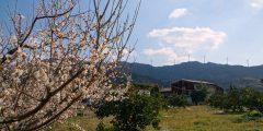 紀美野から有田・広川、冬を楽しみ春を探す旅
