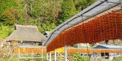 かつらぎ、串柿と紅葉、秋色を訪ねる旅