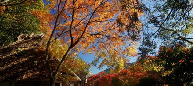 上富田から中辺路、秋の熊野古道を楽しむ旅