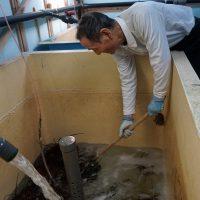 水槽から網ですくい上げる