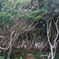 風と戦っている樹木