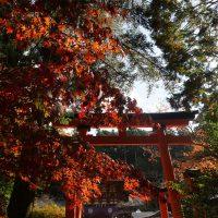 鳥居と紅葉、赤の競演