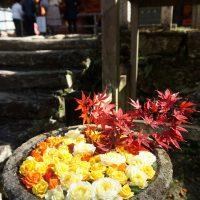 拝殿前にはバラと紅葉