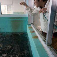 ウミガメにエサをやる柳橋さん